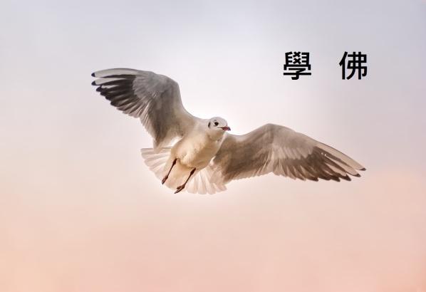 seagull-3465550_1280